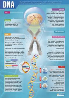 Our DNA Poster is part of our Science series. This engaging poster's main image is a diagram of a DNA cell along with a great deal of information on the subject. Gcse Biology Revision, Science Revision, Gcse Science, Study Biology, Biology Lessons, Ap Biology, Molecular Biology, Science Biology, Science Education