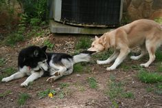 Those puppies can be sooo mean to an old guy, lol.