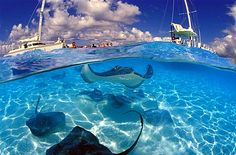 Stingray City    Grand Cayman, Cayman Islands...If you can go, GO TO STINGRAY CITY! So much fun :D!