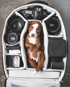 Wishing we always found a cute pup like this in our camera bag 😍 📷 : Planet. Baby Puppies, Cute Puppies, Cute Dogs, Animals And Pets, Cute Animals, Baby Animals, Animal Photography, Photography Shop, Travel Photography