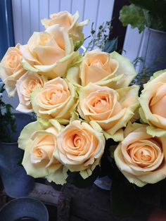 Peach Avalanche roses