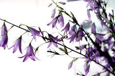 PamyLotta: Friday-Flowers 25/14
