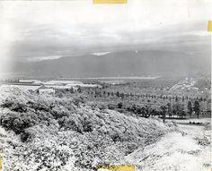 Snow in Pomona (Jan. 1949) Pomona California, California City, California History, Vintage California, Great Places, Places To Visit, Photo Record, Weapon Storage, San Luis Obispo County