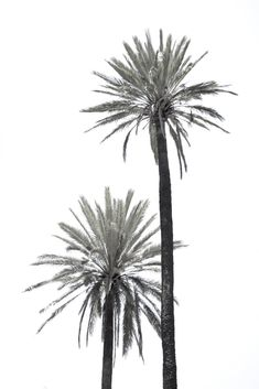 Pin by Suzi K on ~Coconuts & Palm trees Leaf Wall Art, Leaf Art, Groups Poster, Coconut Palm Tree, Tropical Art, White Wallpaper, Large Prints, White Photography, Home Decor Ideas