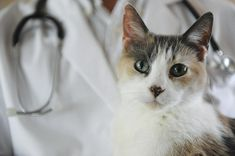 Caring for a Cat with Asthma