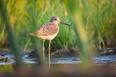 Podle ornitologů zemědělci dost nevyužívají dotace na ochranu krajiny - Zprávy Krize15