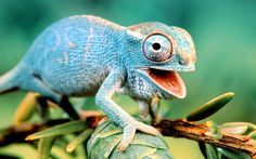 Mocking Lizard