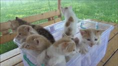 A Container of Kittens
