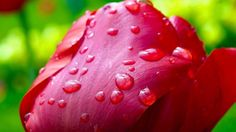 beautiful nature images the most tropical flowers images