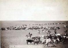 Cattle Drive: Round-up scenes on Belle Fouche [sic], Dakota Territory, in 1887. It was taken in 1887 by Grabill, John C. H., photographer.