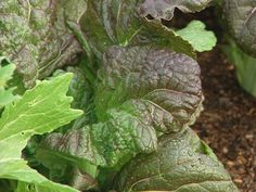 Quick-Growing Spring Vegetables >> http://www.diynetwork.com/outdoors/quick-growing-spring-and-fall-vegetables/index.html?soc=pinterest