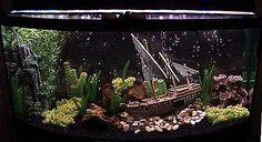 Ship wreck cove setup for small non aggressive tropical fish.