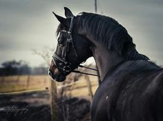 Beautiful and lovely horse 😍
