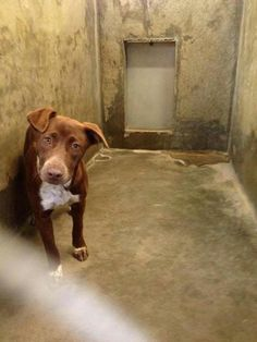 LAST CALL!! PLEASE HELP! URGENT!!!!! Scheduled to be killed if not out by 7pm Thursday 3/27. 1-2 yr old female lab mix. THIS IS A GREAT DOG! Kennel A32. SAVE A SHELTER PET AND SAVE A LIFE! If you cannot adopt or foster please share!  Odessa TX Animal Control. Adoption fee $51. https://www.facebook.com/speakingupforthosewhocant/photos/a.573572332667009.1073741829.248355401855372/749120768445497/?type=1&theater