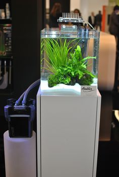 Nano Planted Aquarium with Whale Canister Filter by SICCE Italy