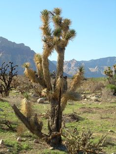 . Nevada Desert, Deserts, Postres, Dessert, Plated Desserts, Desserts