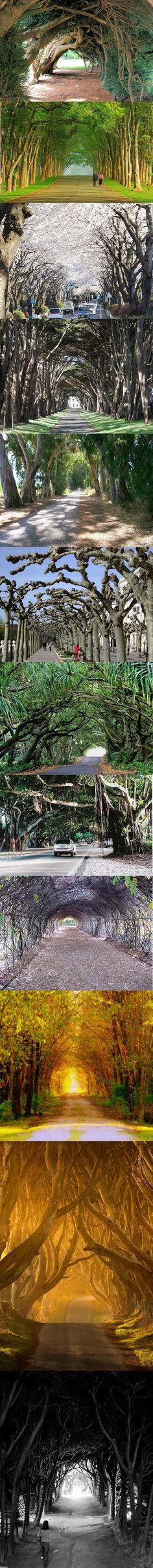 12 romantic tree tunnels