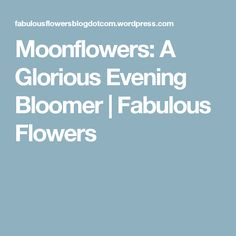 Moonflowers: A Glorious Evening Bloomer   Fabulous Flowers