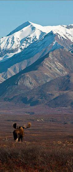 Denali National Park, Alaska, VS http://www.vertrekdirect.nl/bestemming/Verenigde_Staten?utm_source=pinterest&utm_medium=textlink&utm_campaign=socialmedia