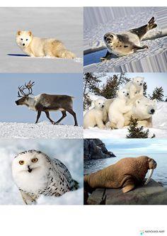 Art Activities For Kids, Winter Activities, Polar Animals, Polar Bear, Igloo Craft, Pre K Curriculum, Polo Norte, Montessori Materials, Pet Memorials