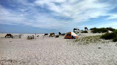 Chincoteague pony camping!