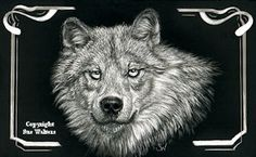 Wolf with border - Copyright Sue Walters