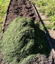 Příprava půdy a zapravení živin je nutností. Diy Planters, Flowers, Gardening, Raised Beds, Lawn And Garden, Royal Icing Flowers, Flower, Florals, Floral