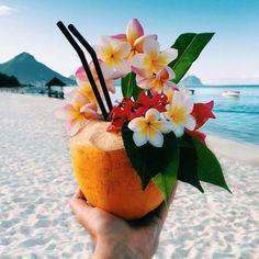 Flowers in tropical drink