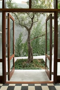 Sculptural tree, centred on doorway, focal point of patio (Franchesca Watson