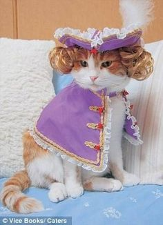 Cats Wearing Clothes | Cats-Wearing-Animal-Clothing6