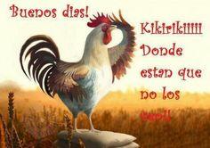 Buenos dias les deceo un bonito dia!!!!! - Luis Ortiz - Google+