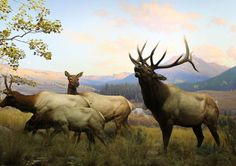 New Technology Saves Old Dioramas