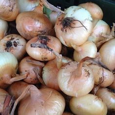 #onions at Forest Hills Greenmarket in #Queens #farmersmarketnyc
