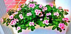 Amor por las flores