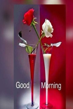 Beautiful Morning Pictures, Good Morning Beautiful Flowers, Beautiful Morning Messages, Good Morning Roses, Good Morning Images Flowers, Good Morning Images Hd, Sunday Images, Morning Pics, Morning Morning