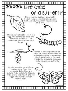 All About Butterflies and Their Life Cycle Butterfly Kids, Butterfly Life Cycle, Butterfly Quotes, Kindergarten Assessment, Kindergarten Science, Science Activities For Kids, Culture Activities, Second Grade Science, Preschool Worksheets