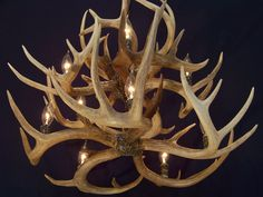 """LEGEND light Double"""" Shed Whitetail Antler Chandelier lamp light Antler Chandelier, Chandelier Lamp, Chandeliers, Lamps, Antler Centerpiece, Lewis And Clark Trail, Shed Antlers, Antler Art, Candelabra"""