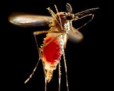 #Zika in 2017: Virus threat has been quiet, but it hasn't gone away - AL.com: AL.com Zika in 2017: Virus threat has been quiet, but it…