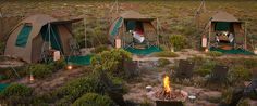 Chiefs Tented Camp - maybe for August / Sept 2015? These camps only go up for a short period each year. Bit pricey, but if we wanna do it and we save...