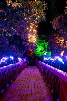 Photo Gallery - TSB Bank Festival of Lights Pukekura Park, New Plymouth,NZ.      VISITED, SPECIAL MEMORIES!!!!!!!!!!!!!!