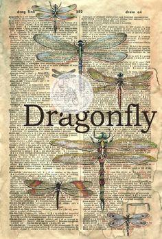 PRINT:  Dragonflies Mixed Media Drawing on Antique by flyingshoes