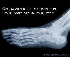 Foot fact