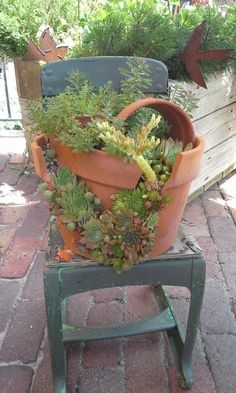 Did you catch my cracked pot how-to in the fall 2013 Country Gardens magazine. This is what it looked like this summer. Succulent Gardening, Succulents Garden, Garden Pots, Container Gardening, Broken Pot Garden, Vintage Outdoor Decor, Flower Pots, Flowers, Topiary