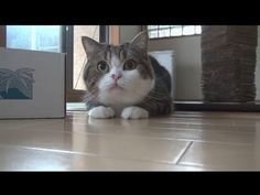 In celebration of Maru the box-loving cat's sixth birthday, his owner created a compilation video of some of his funniest and cutest moments from 2012.