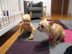 human toddler in Frenchie suit and Frenchie in Frenchie suit