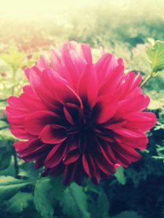 #nature # byJordanPlatidis