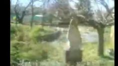 Clipe de fericite la Curtea Domneasca pentru fiul si tatal din familia Nicaflorin83.ro - Film Dailymotion