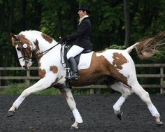 Love that this is a pinto looking every bit as proud and elegant as a warmblood.