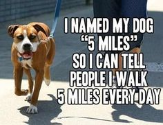 Top 30 Funniest Picture Quotes #Funnies