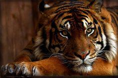 Máte rádi zvířata a nejen ta chlupatá? Chtěli byste se o nich něco dozvědět a přitom se neztratit nejen při procházce ZOO, ale i při pročítání dostupných informací z tabulí u konkrétních ubikací? Máme pro vás služby spolehlivého průvodce, který se vás rád ujme a zasvětí vás do zajímavostí života zvířat. http://www.rajzazitku.cz/35-zazitky-se-zviraty/68-s-pruvodcem-po-zoo.htm